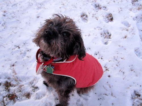 Rosie in her new coat