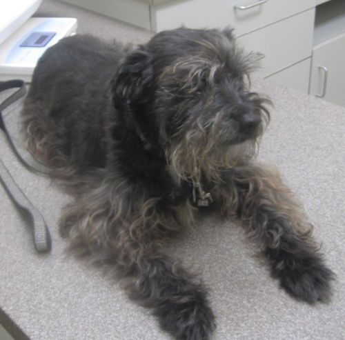 Rosie at the doggie oncologist