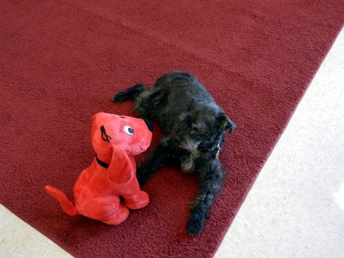 Rose with clifford
