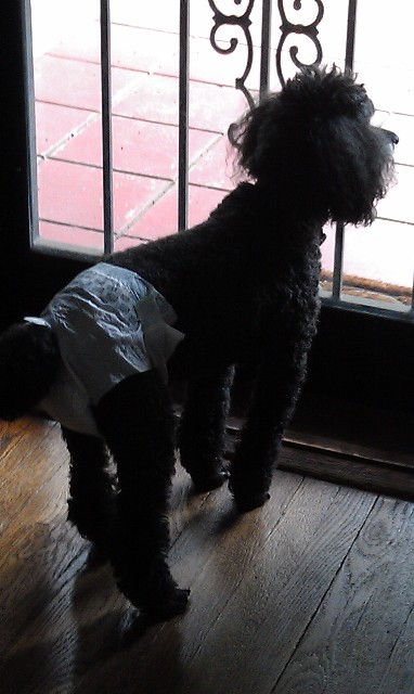 Edgar in diapers