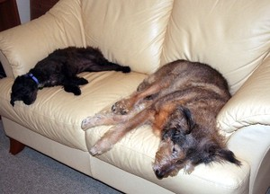 Couch_dogs