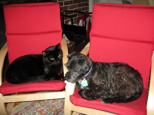 Rosie_and_cats_010_medium_web_vie_2